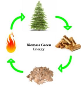 Biomass Cycle