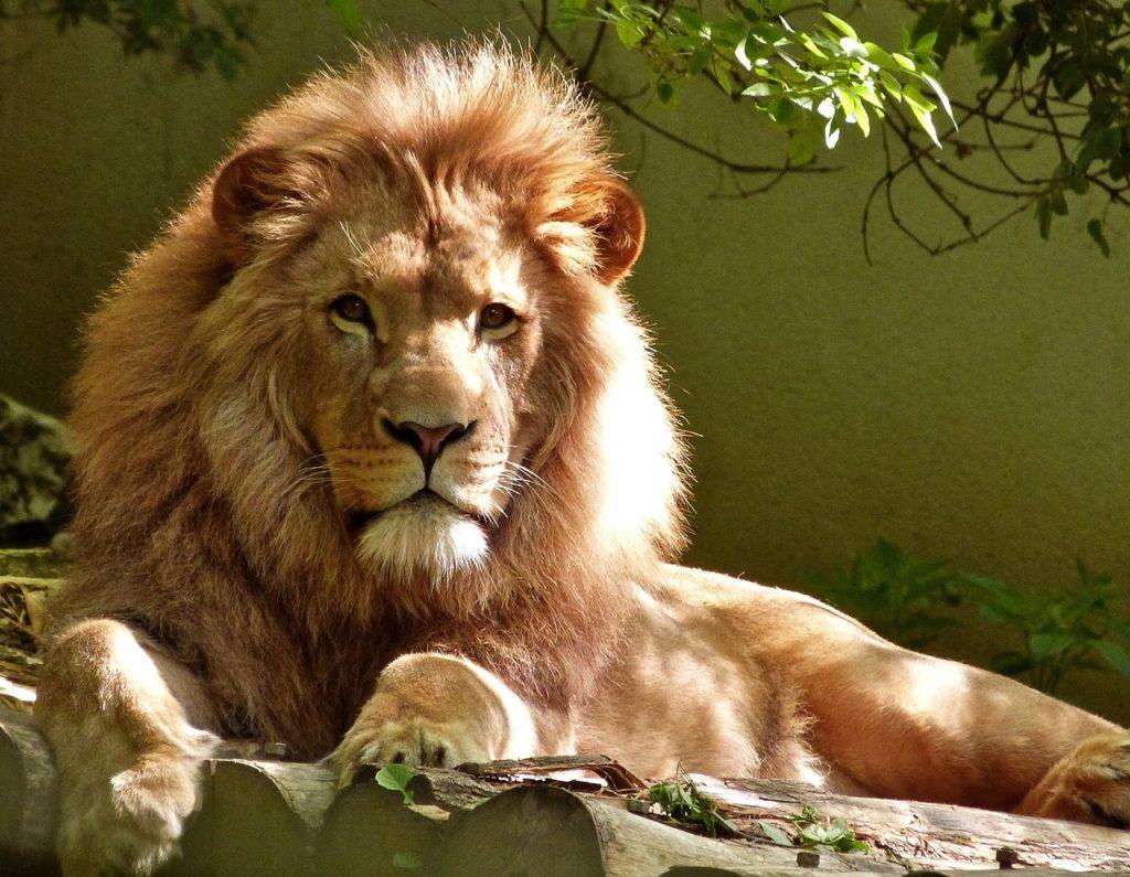 lion enclosure roof fans