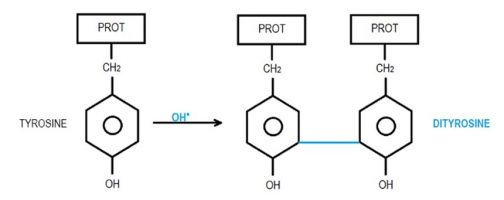 Lipid peroxidation reaction